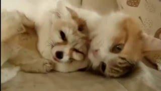 ТОП 10 лучшие видео про фенек. Смешная лиса фенек. Funny Fennec Fox .