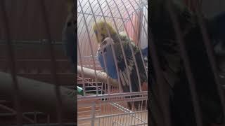 v2Movie : Familie de perusi in cuib! :D