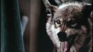 Reel Wolves: A Tribute to Unsung Wolves in Movies