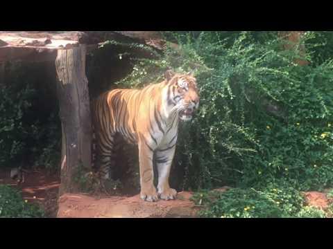 Animal Planet | Amazing Animals | ពិភពសត្វ