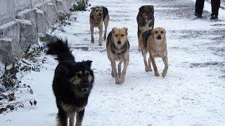Что делать с бездомными собаками?(Мои страницы: Вконтакте http://vk.com/dmitryshilov Фейсбуке https://www.facebook.com/dmitryi.shilov Одноклассниках ..., 2014-05-22T01:34:34.000Z)