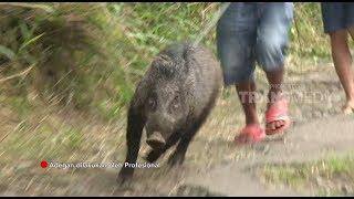 Latihan Berburu Babi Hutan | THE TOUR RANGERS (12/01/19) Part 1