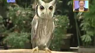 Хитрожопая сова