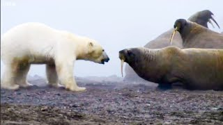 The Planet Earth Collection - Part 1 | Top 5 | BBC Earth