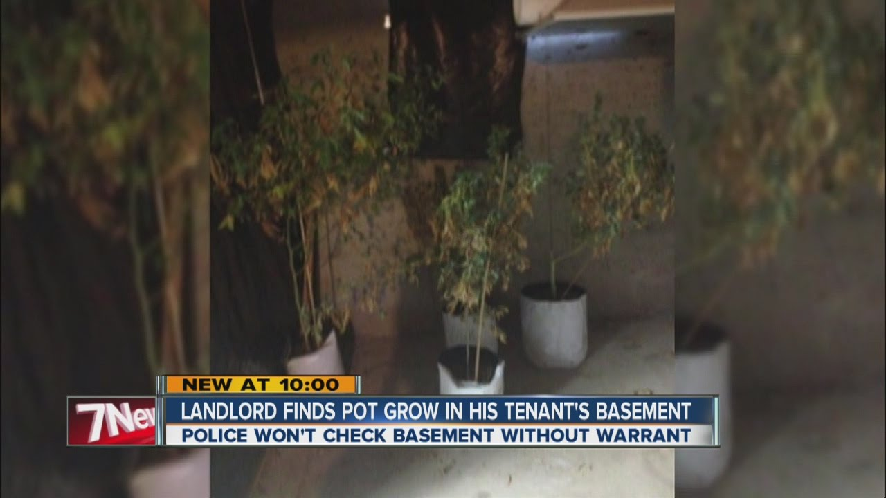 Landlord finds tenant growing pot in basement