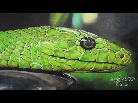 Como Dibujar una Serpiente Realista  YouTube