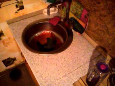 Горный попугай Сан Саныч принимает душ