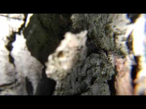 Yggdrasil - 2017-06-26