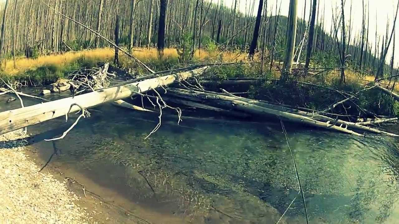 Montana fly fishing youtube for Montana out of state fishing license