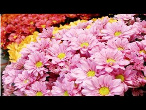 Treinamento de Florista - Tipos de Flores