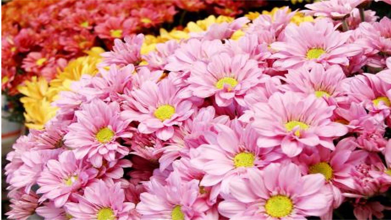 Treinamento de florista tipos de flores cursos cpt - Tipos de plantas ...