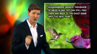 Hummingbird Migration - Following God s Call | David Rives