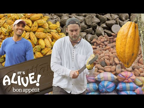 Brad Makes Chocolate in Ecuador: Part 1 | Its Alive | Bon Appétit