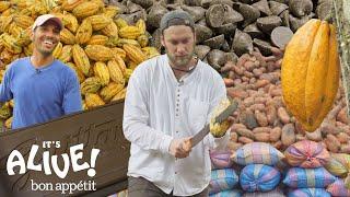 Download Brad Makes Chocolate in Ecuador: Part 1   It's Alive   Bon Appétit Mp3 and Videos