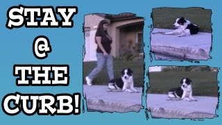 Stay At The Curb - Clicker Dog Training