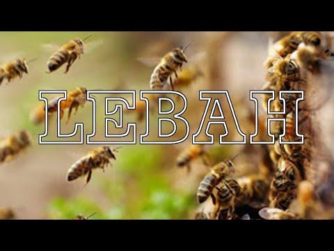 lebah-madu-lebah-klanceng-lebah-trigona-lebah-sarang-lebah-hutan-|-cinematic-lebah-new-normal