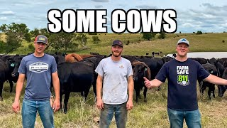 Some Cows (Some Girls Parody)
