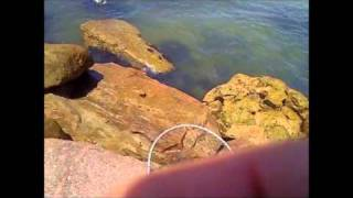 Fishing Surfside, Texas, Jetties, Florida Pompanos