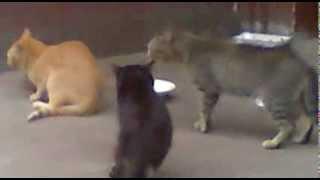 Злобные коты