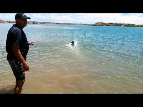 rottweiler swimming