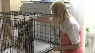 Люди и собаки: жестокость и забота