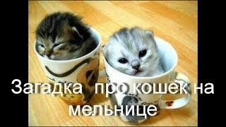 Загадка про кошек на мельнице/ про кошек у мельника