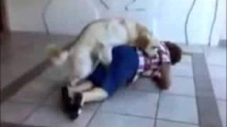 собака трахнула бабушку