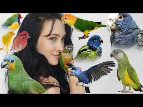 Pros And Cons Of These Top 10 Beginner Parrots    Parakeets, Conures, Parrots, And More!