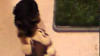 Dog Romance.mp4