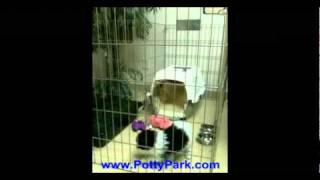 Potty Park Crate Training Video.mp4