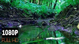 Лесной ручей, звуки природы, звуки, шум воды, природа, ручей в лесу, релакс, медитация, йога.