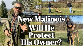 New Malinois  Will He Protect His Owner?