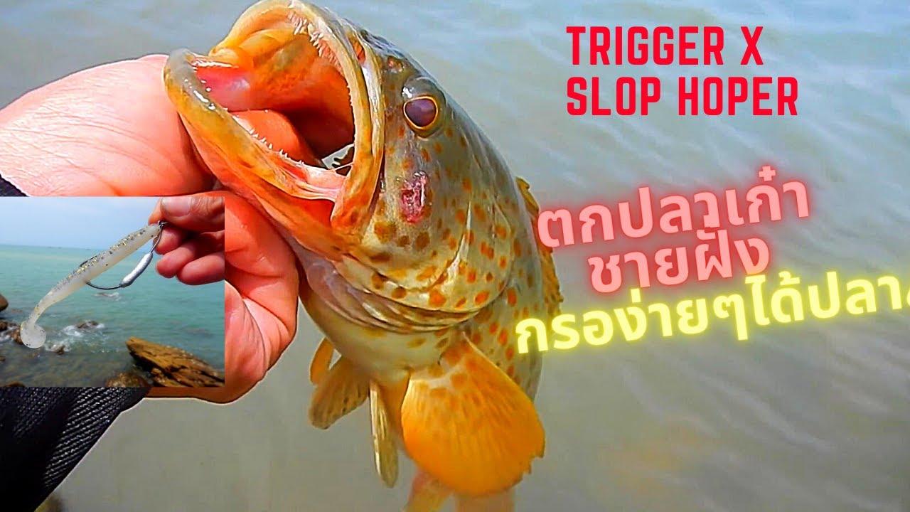 Trigger x slop hopper Grouper ต�ปลาเ�๋าชาย�ั่งด้วยเหยื่อยางทริ�เ�อร์เอ็�