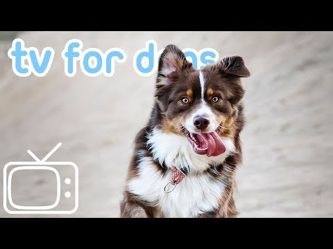 tv-for-dogs!-relax-your-dog-at-home-tv-with-calming-lullabies!-new!