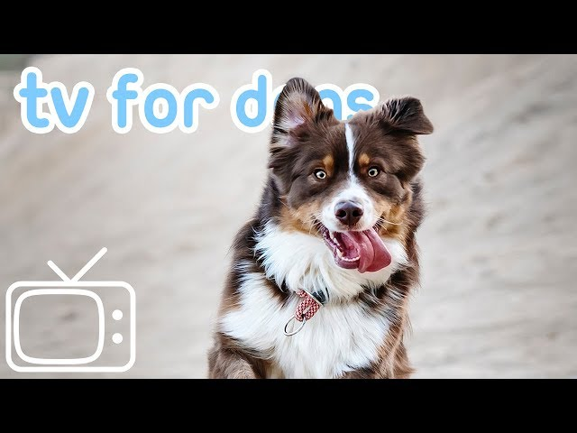TV for Dogs! Relax Your Dog at Home TV with Calming Lullabies! NEW!