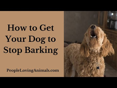 best-ways-to-stop-a-dog-from-barking