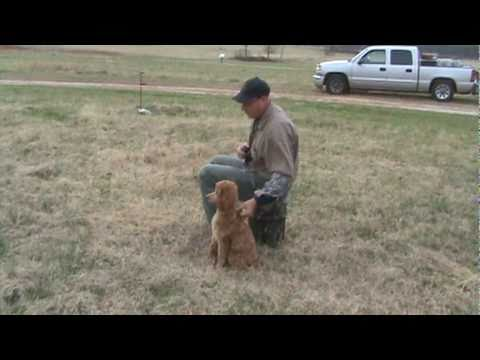 Louter Creek Hunting Poodle