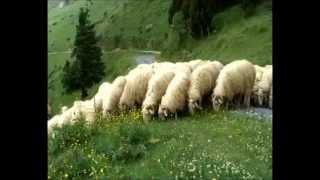 Moutons - Radio Paris ment