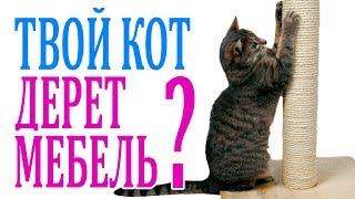КАК ОТУЧИТЬ кота драть мебель и ПРИУЧИТЬ к когтеточке.