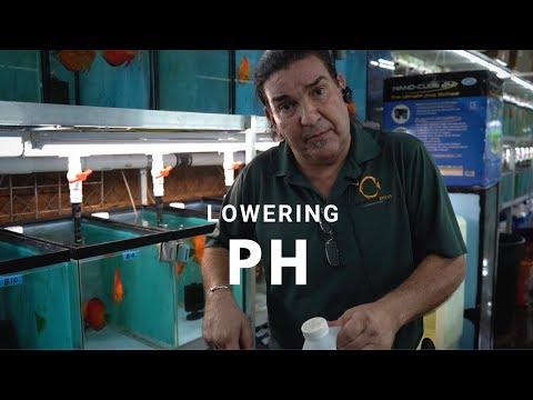 КАК: снизить PH для вашего аквариума с тропическими рыбками