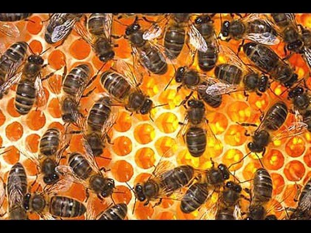 KRÁLOVNA SLUNCE - co se nám včely snaží říct
