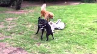 Canine orgy!