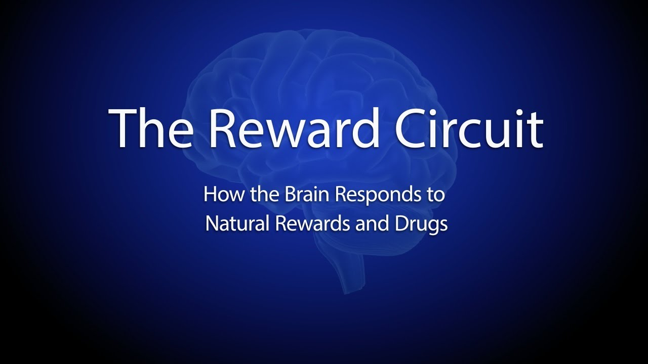 The reward circuit how the brain responds to natural rewards and the reward circuit how the brain responds to natural rewards and drugs youtube ccuart Gallery