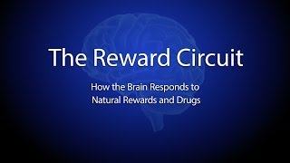 Brain's Reward System