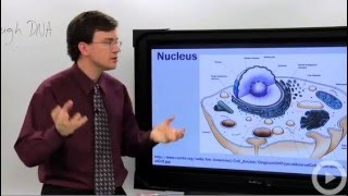 Nucleus - Learn biology from a real expert