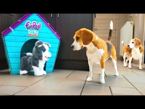 Dogs Vs FurReal Husky Puppy Prank | Funny Dogs Louie and Marie