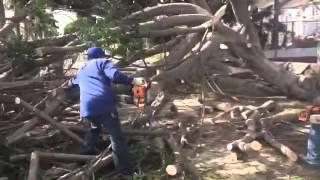 Árboles caídos en Ensenada