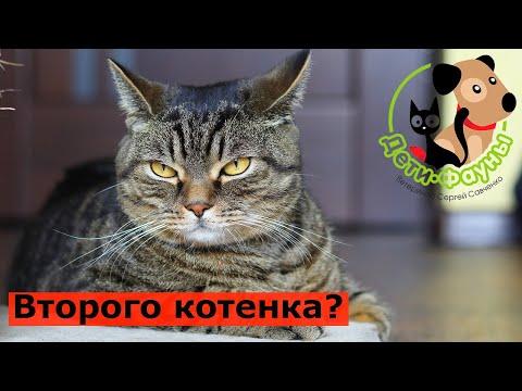 Вопрос: Какие интересы в жизни бывают у любителей кошек и фауны?