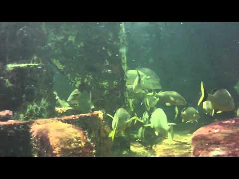 ScubaCaching @ Jules Undersea Lodge