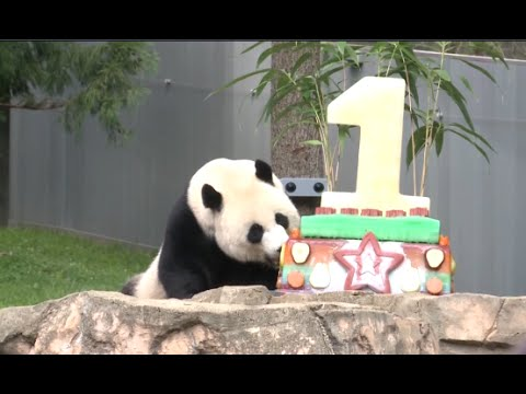 National Zoo in Washington Throws  Birthday Party for Giant Panda Bei Bei